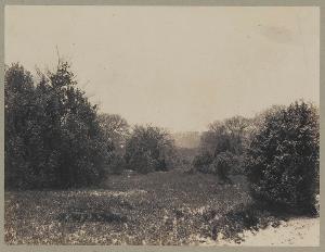 Arbres et buissons (Bäume und Büsche), um 1860
