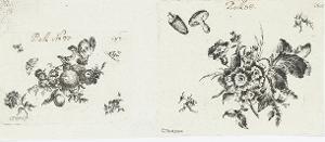 Blüten, Falter und Pilze (»Verschiedene Blüten«), nicht datiert