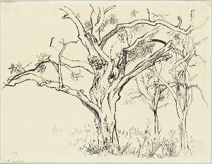 Wiese mit drei Bäumen, 1925