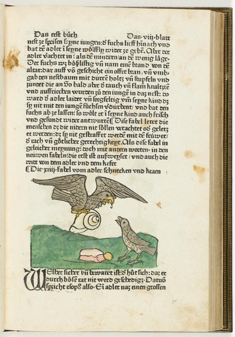 Die 14. Fabel: Vom Adler, der Schnecke und der Krähe (in: Aesopus, Fabeln. Augsburg: Zainer, viij recto)