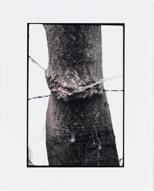 Tree and Fence, 2000